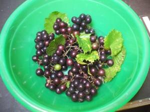 Gail's Grapes