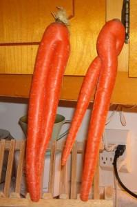Carrotcrazies